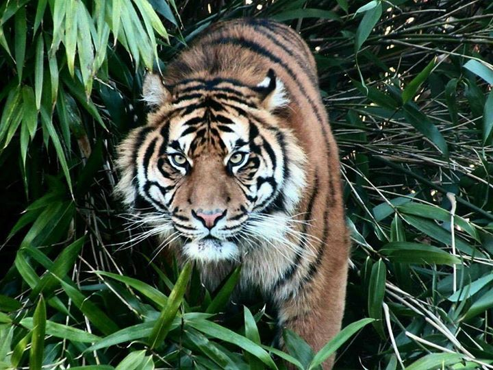 Category: Zoo Discover the wonders of wildlife among 4, animals in a lush landscape. Marvel at up-close animal encounters, from special presentations to a chance to feed giraffes and flamingos.